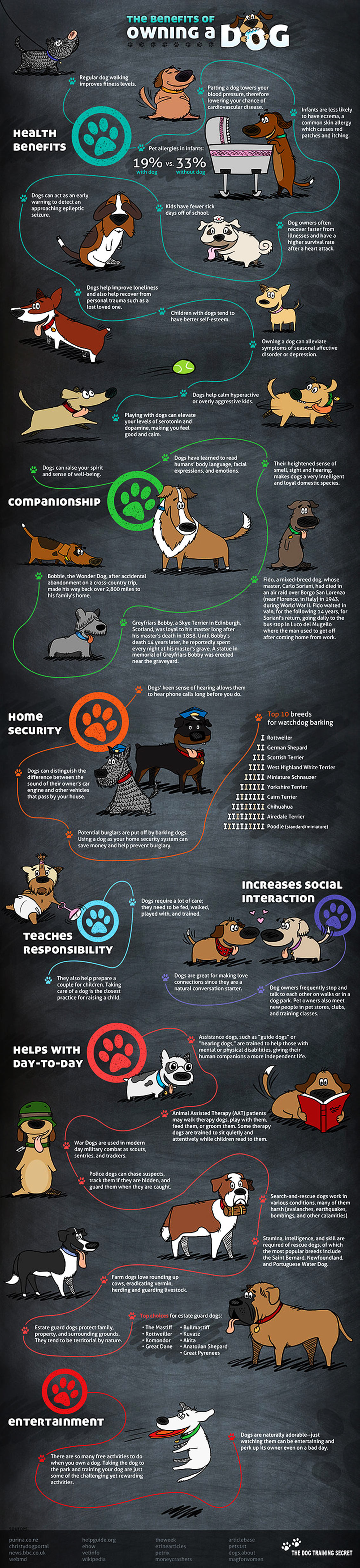 38 Reasons for Owning a Dog - Pet infographic