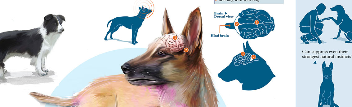 Obedience Training for Dogs Infographic