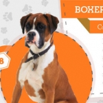 25 Most Popular Dog Breeds and Their Health Issues