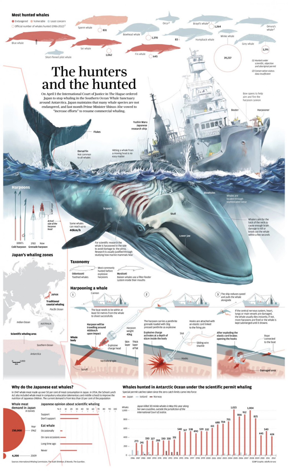 Whale Poaching In Japan Infographic