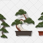 Bonsai Tree Care: 8 Tips for Beginners