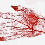 Human Blood: The Ultimate Guide