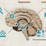 Neuroplasticity: Rewiring the Brain