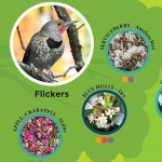 Using Plants to Attract Birds to Your Backyard Garden