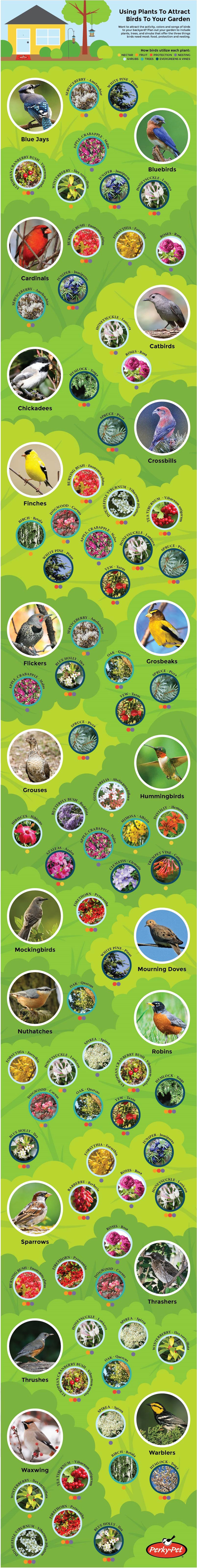 Using Plants to Attract Backyard Birds to Your Garden Infographic