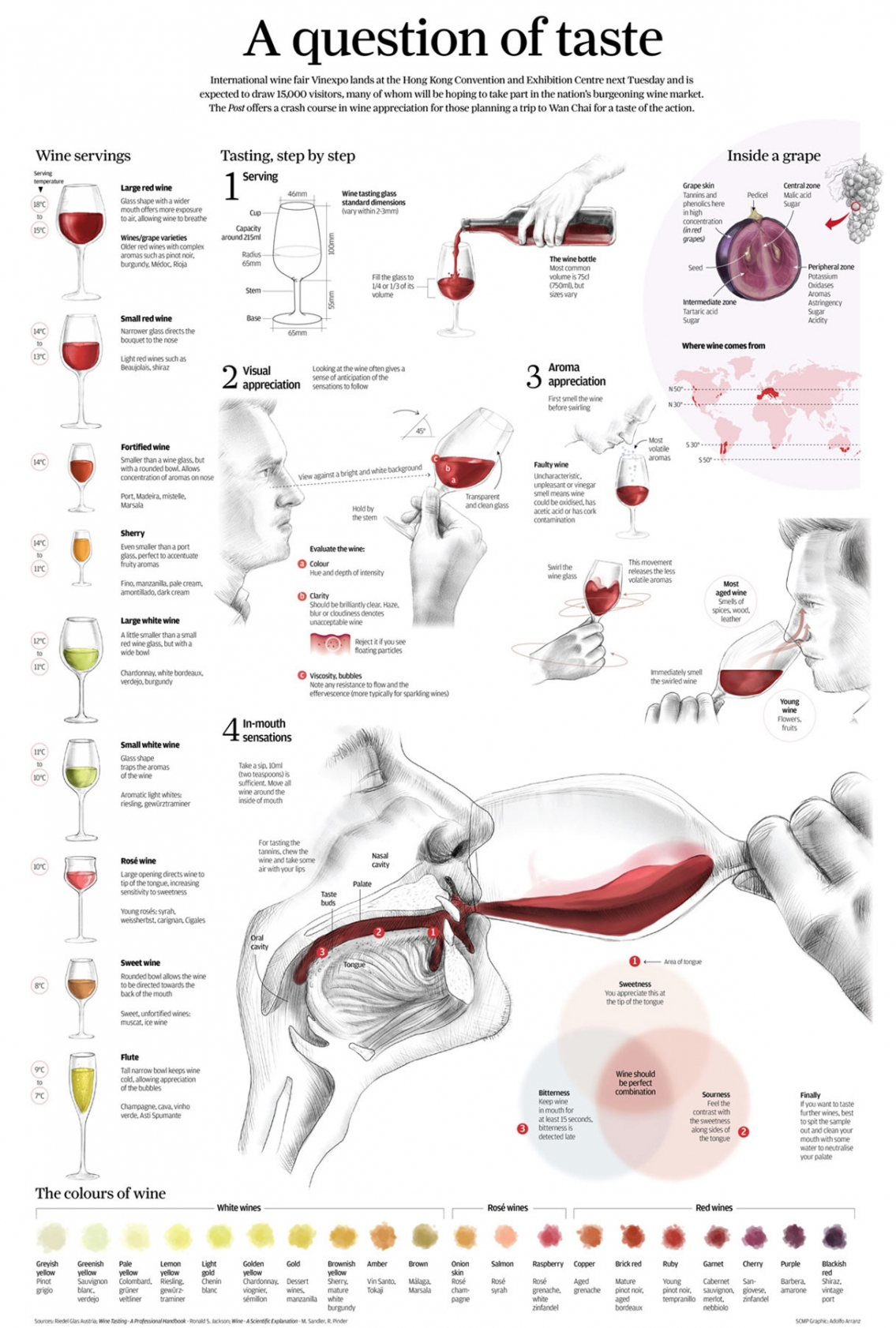 The Connoisseur Way to Tasting Wine Infographic