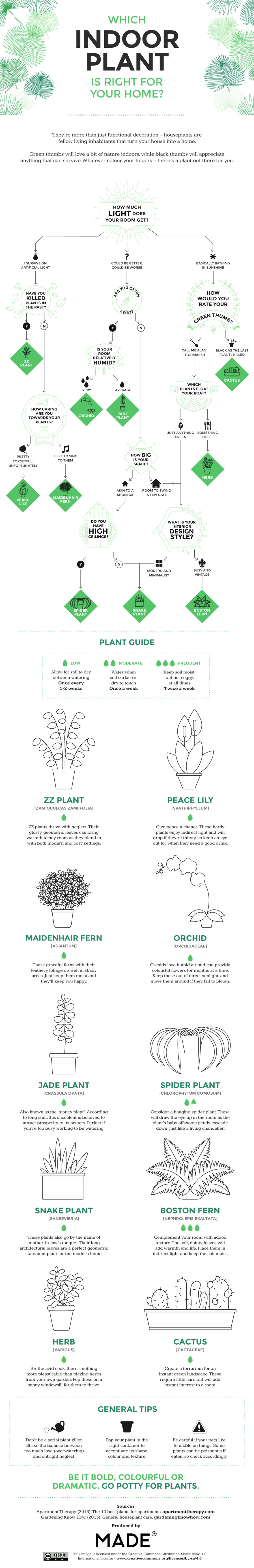 Which Types of Houseplants are Best for Your Home Infographic
