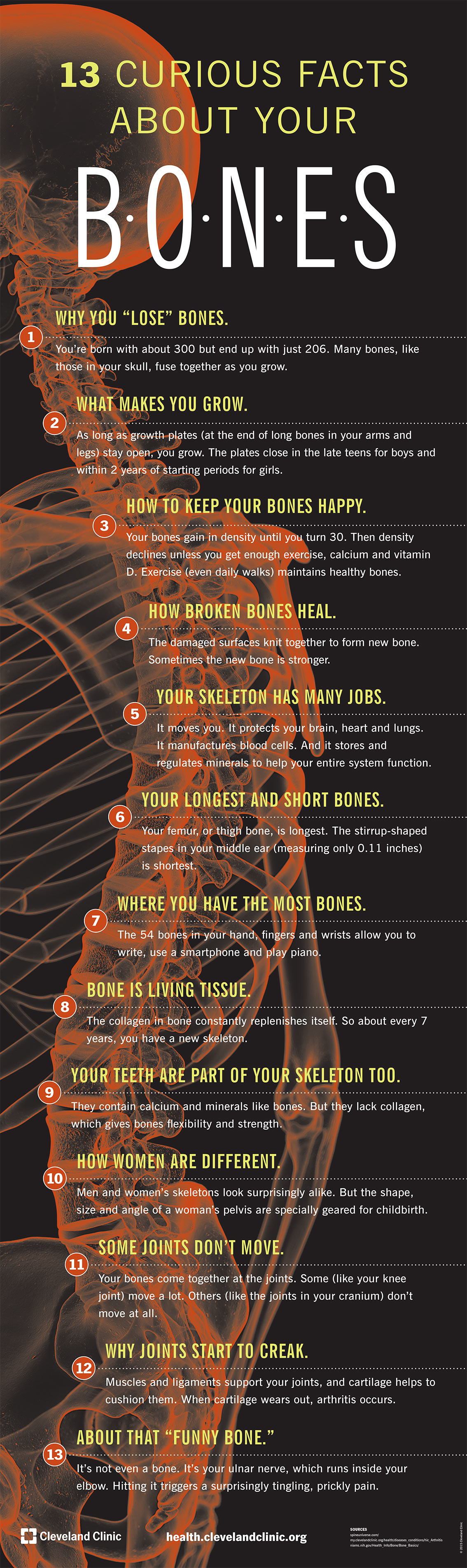 Curious Facts about Your Bones - Health Infographic