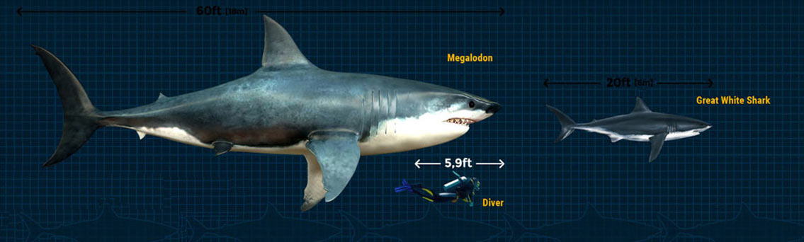 Megalodon Shark: The Largest Predator That Ever Lived [Infographic]