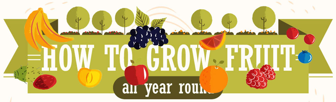 Grow Fruits in Your Garden All Year Round