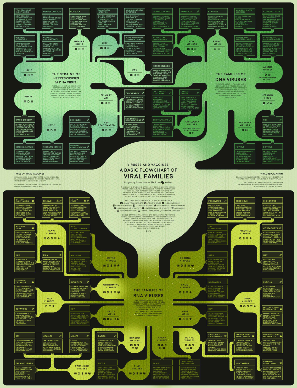 Different Types of Viruses in Biology Flowchart Infographic
