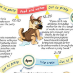 Potty Training Schedule: How to Housebreak a Puppy