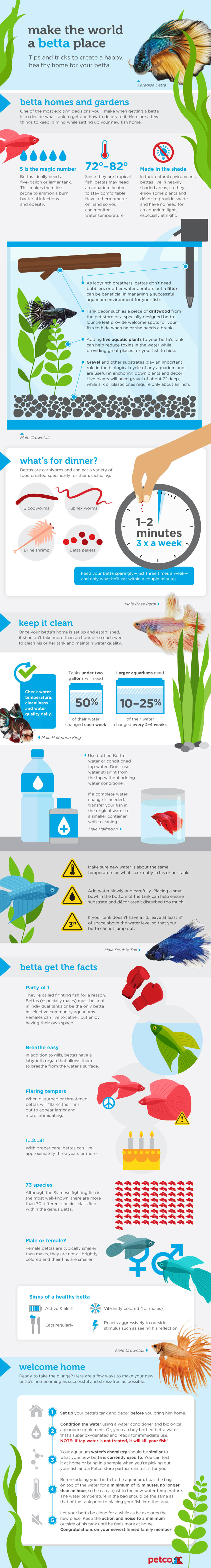 How to take care of a betta fish infographic for How do you take care of a betta fish