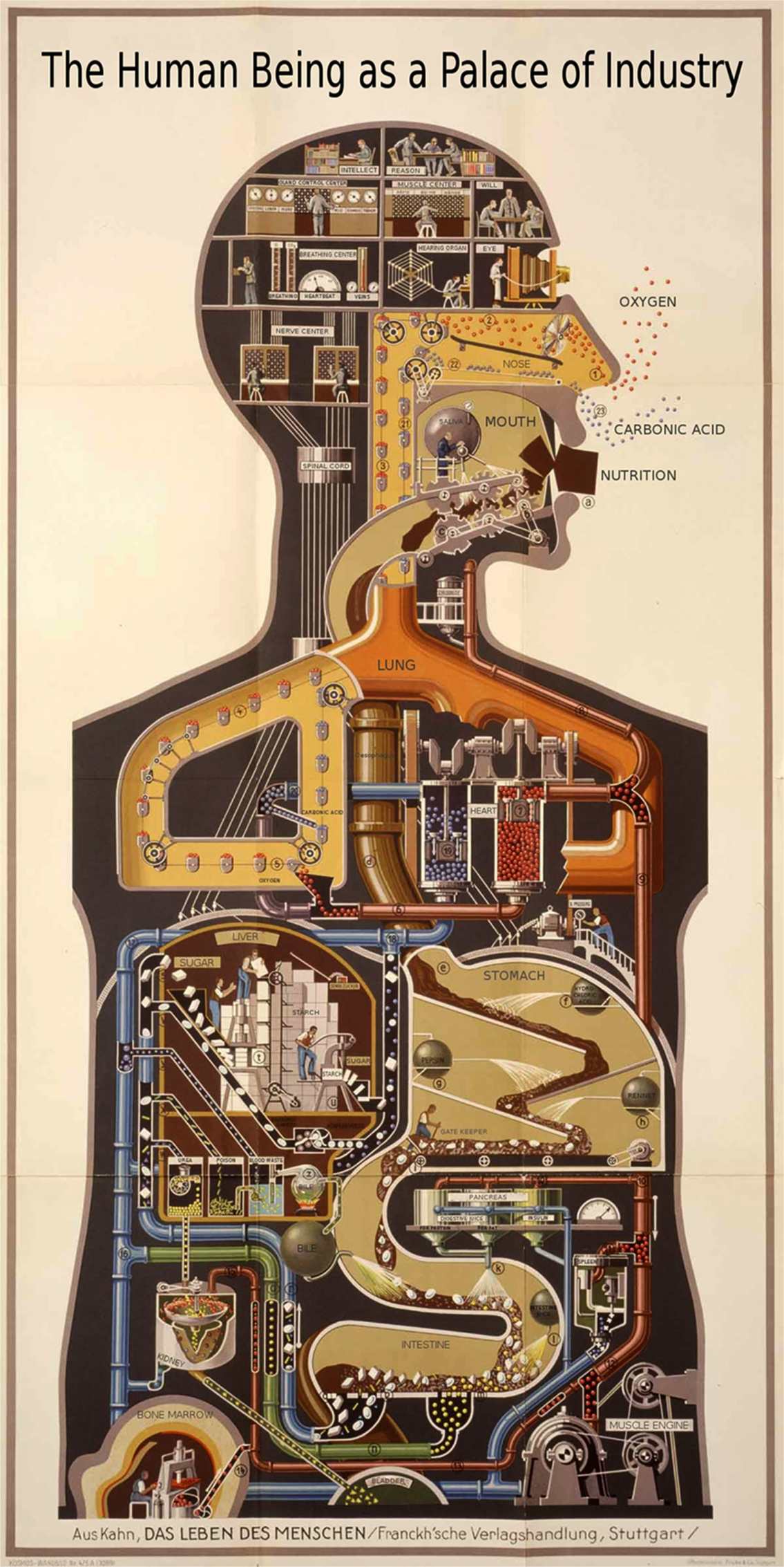 Man as Industrial Palace Vintage Infographic