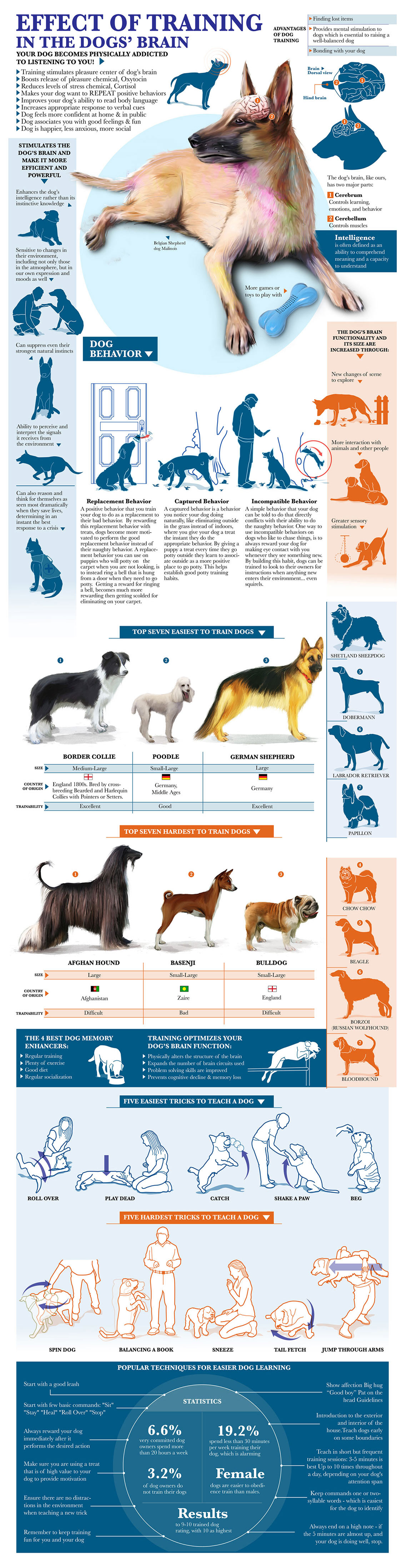 Benefits of Obedience Training for Dogs Infographic