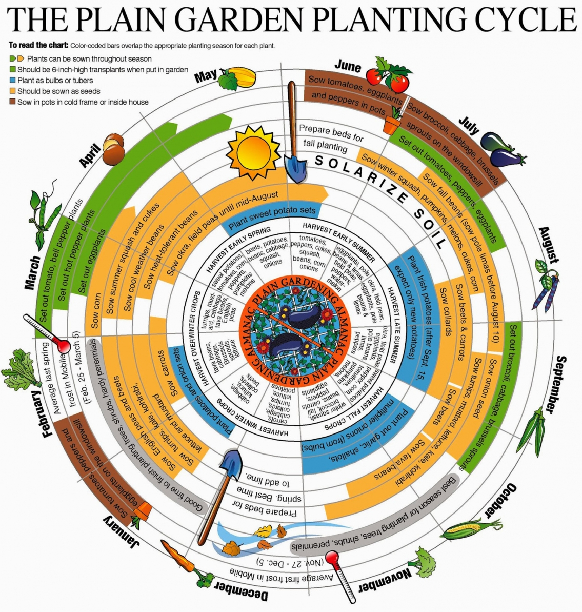 The Plain Garden Planting Cycle Infographic