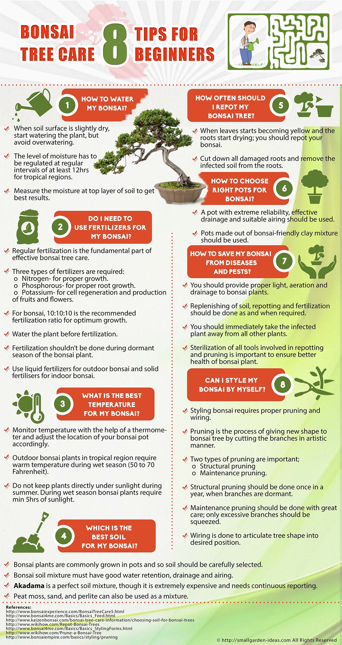 Bonsai Tree Care Tips for Beginners Infographic