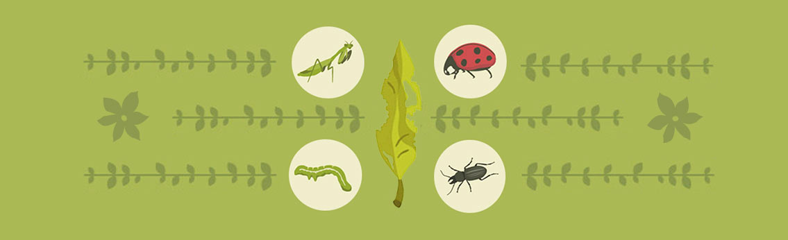 Common Garden Pests How to Manage Them