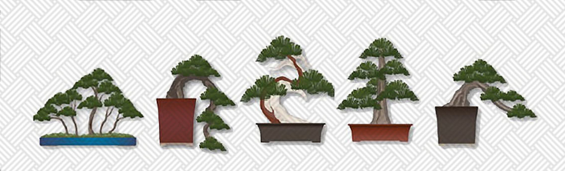 How to Take Care of Your Bonsai Tree Infographic