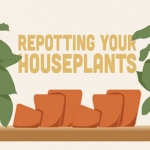 Guide to Repotting Indoor Plants