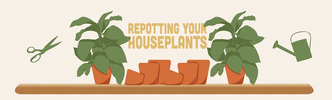Repotting Indoor Plants