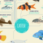 Tropical Fish: List of Species