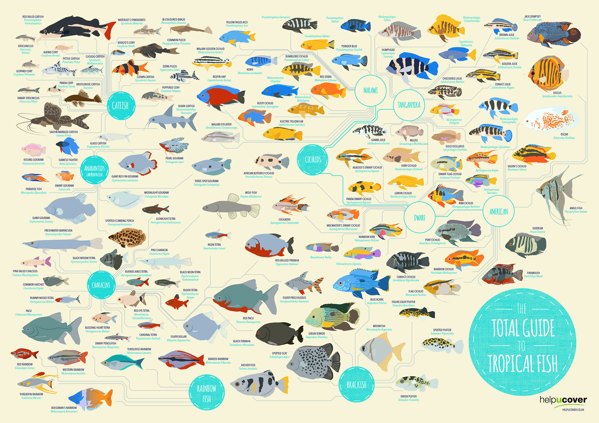 tropical fish list of species infographic