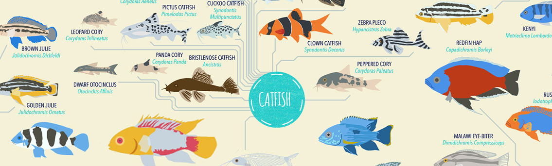 Tropical Fish List