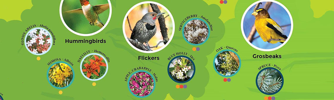 Using Plants to Attract Backyard Birds to Your Garden