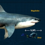 Megalodon Shark: The Largest Predator That Ever Lived