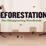 The Negative Impacts of Deforestation