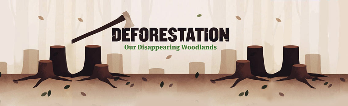 Negative Impacts of Deforestation