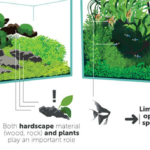 Complete Guide to Aquascaping Styles
