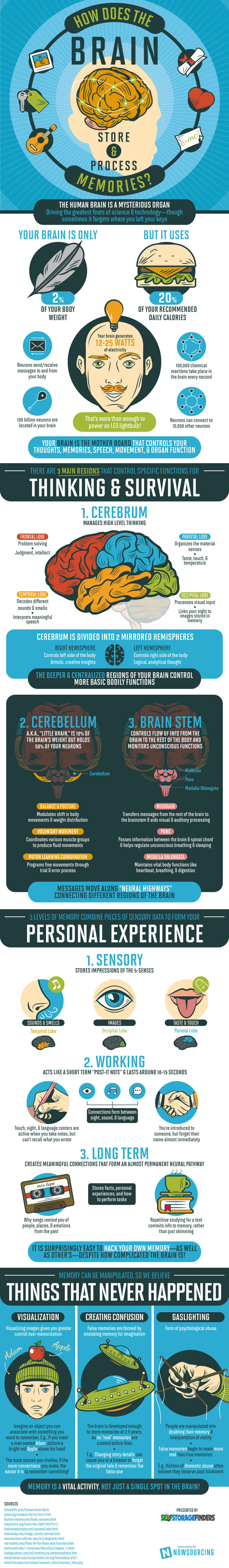 How the Human Brain Store Memories Infographic