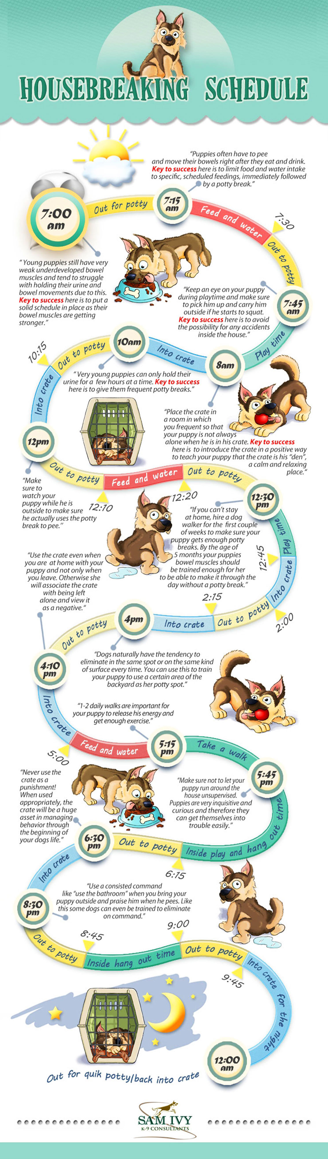How to Housebreak a Puppy - Potty Training  infographic