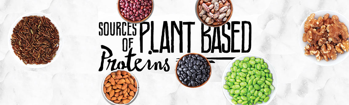 Best Sources of Plant Based Protein