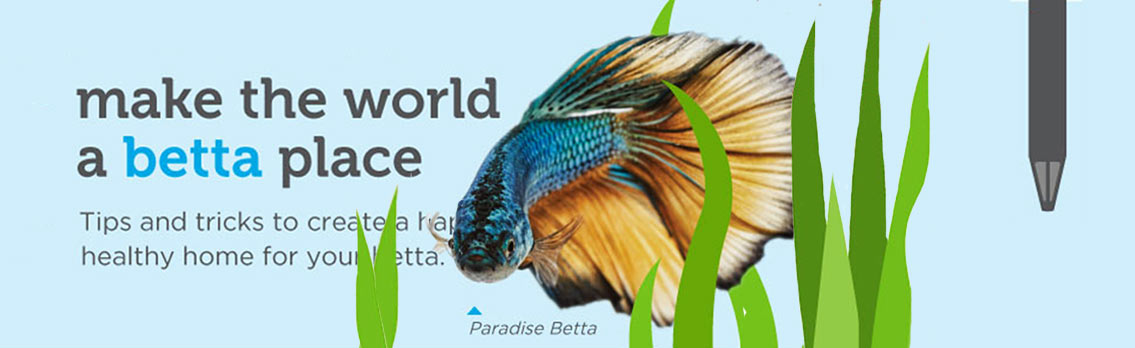 How to take care of a betta fish infographic for How to care for a betta fish