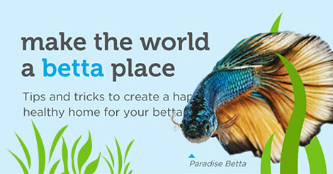 How To Take Care Of A Betta Fish Infographic